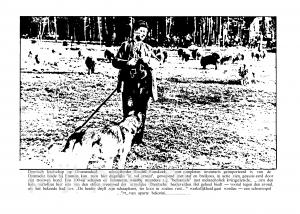 29 juni 1936